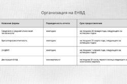 Отчетность на ЕНВД